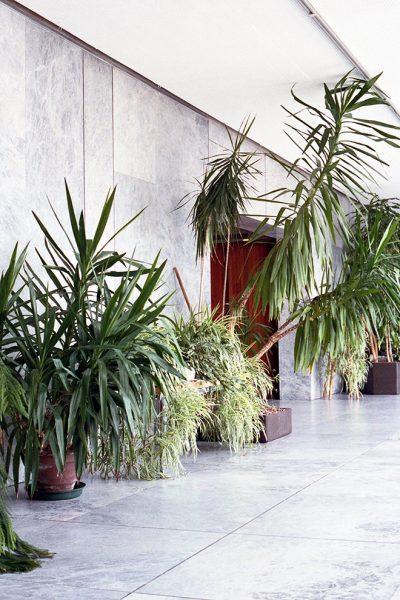 INA NIEHOFF – PLANT STUDIES